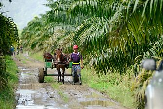 Man and horse on sustainable palm oil plantation in Honduras.